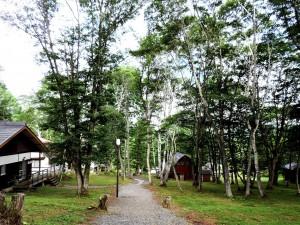 森の中1b30_DSCN0720